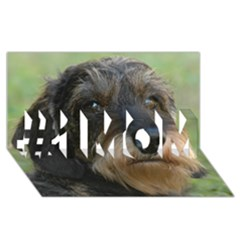 Wirehaired Dachshund #1 MOM 3D Greeting Cards (8x4)