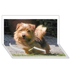 Norfolk Terrier Full Twin Heart Bottom 3D Greeting Card (8x4)