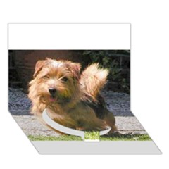 Norfolk Terrier Full Circle Bottom 3D Greeting Card (7x5)