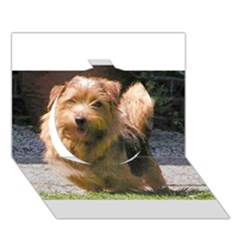 Norfolk Terrier Full Circle 3D Greeting Card (7x5)