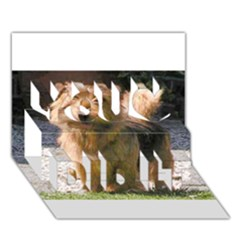 Norfolk Terrier Full You Did It 3d Greeting Card (7x5)