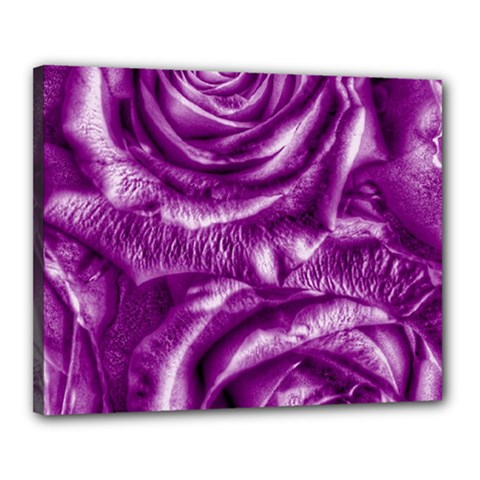 Gorgeous Roses,purple  Canvas 20  x 16