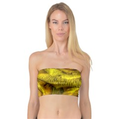 Gorgeous Roses, Yellow  Women s Bandeau Tops