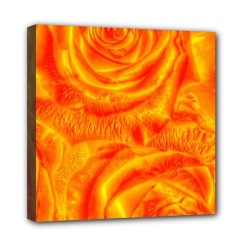 Gorgeous Roses, Orange Mini Canvas 8  X 8