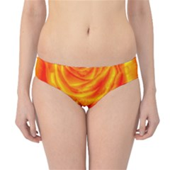 Gorgeous Roses, Orange Hipster Bikini Bottoms