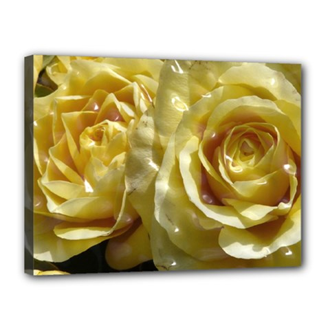 Yellow Roses Canvas 16  X 12