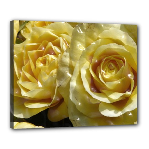 Yellow Roses Canvas 20  X 16