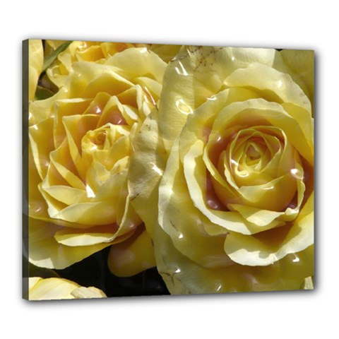 Yellow Roses Canvas 24  X 20