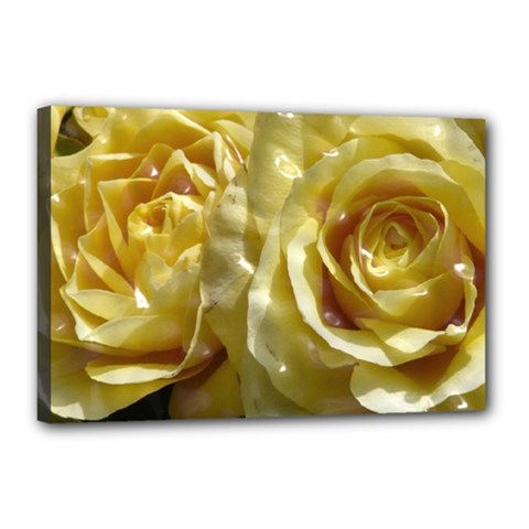 Yellow Roses Canvas 18  X 12