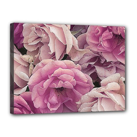 Great Garden Roses Pink Canvas 16  X 12