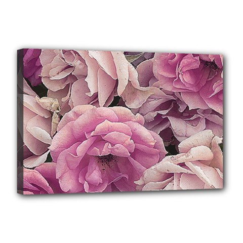 Great Garden Roses Pink Canvas 18  X 12
