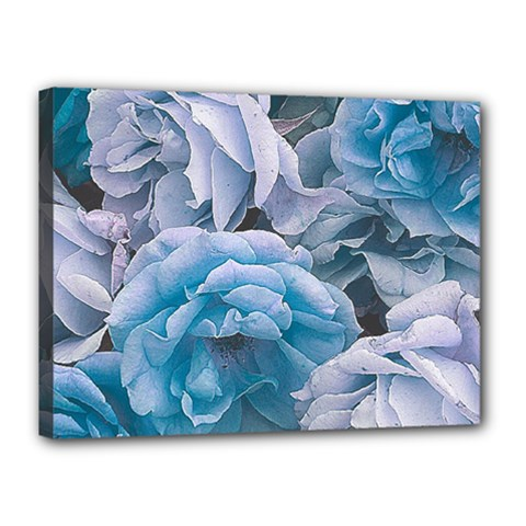 Great Garden Roses Blue Canvas 16  X 12