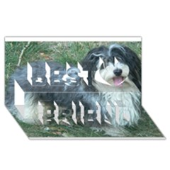 Havanese Full Best Friends 3D Greeting Card (8x4)