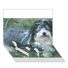 Havanese Full LOVE Bottom 3D Greeting Card (7x5)