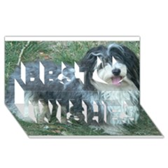 Havanese Full Best Wish 3D Greeting Card (8x4)