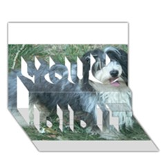 Havanese Full You Did It 3D Greeting Card (7x5)