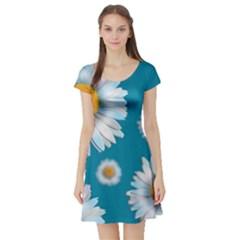 Floating Daisies Short Sleeve Skater Dresses