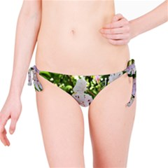 Amazing Garden Flowers 35 Bikini Bottoms