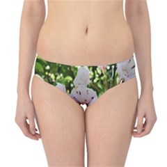 Amazing Garden Flowers 35 Hipster Bikini Bottoms