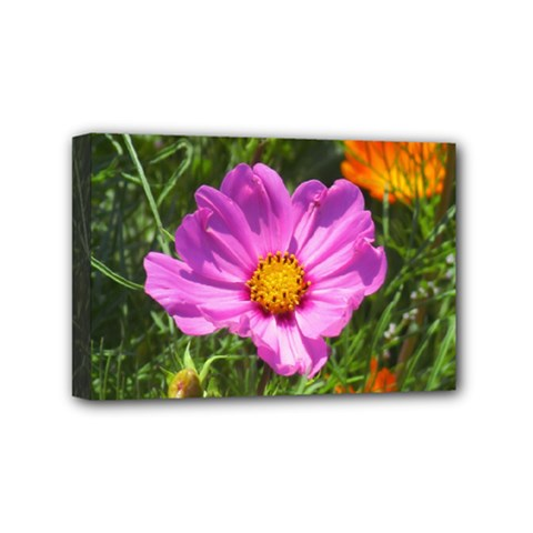 Amazing Garden Flowers 24 Mini Canvas 6  X 4