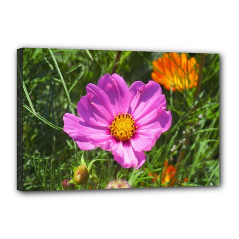 Amazing Garden Flowers 24 Canvas 18  X 12