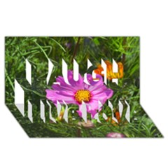 Amazing Garden Flowers 24 Laugh Live Love 3D Greeting Card (8x4)