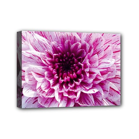 Wonderful Flowers Mini Canvas 7  X 5