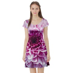 Wonderful Flowers Short Sleeve Skater Dresses