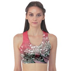 Dandelion 2015 0710 Sports Bra
