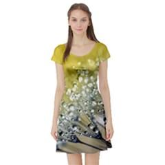 Dandelion 2015 0713 Short Sleeve Skater Dresses