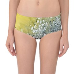 Dandelion 2015 0713 Mid-Waist Bikini Bottoms
