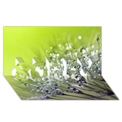 Dandelion 2015 0714 Sorry 3d Greeting Card (8x4)