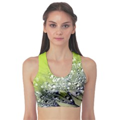 Dandelion 2015 0714 Sports Bra