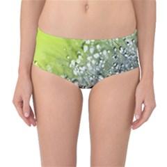 Dandelion 2015 0714 Mid Waist Bikini Bottoms