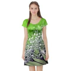 Dandelion 2015 0715 Short Sleeve Skater Dresses