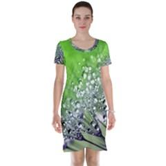 Dandelion 2015 0715 Short Sleeve Nightdresses