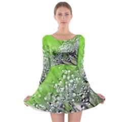 Dandelion 2015 0715 Long Sleeve Skater Dress