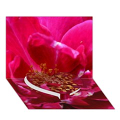Red Rose Heart Bottom 3D Greeting Card (7x5)