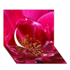 Red Rose Circle 3D Greeting Card (7x5)