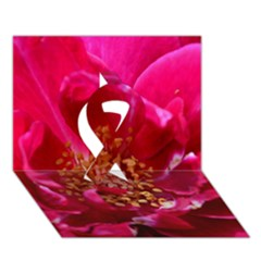 Red Rose Ribbon 3D Greeting Card (7x5)