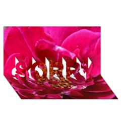 Red Rose SORRY 3D Greeting Card (8x4)