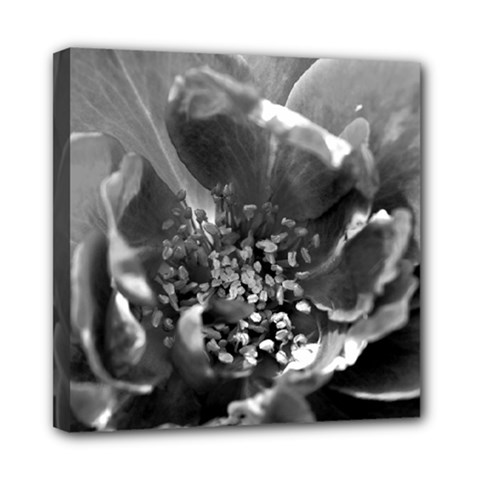Black And White Rose Mini Canvas 8  X 8