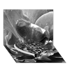 Black And White Rose Heart Bottom 3d Greeting Card (7x5)