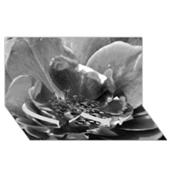 Black and White Rose Twin Heart Bottom 3D Greeting Card (8x4)