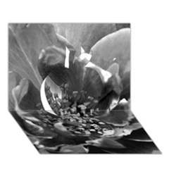 Black And White Rose Apple 3d Greeting Card (7x5)