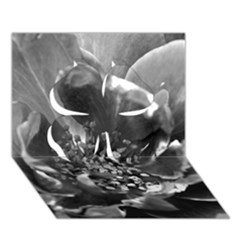 Black And White Rose Clover 3d Greeting Card (7x5)