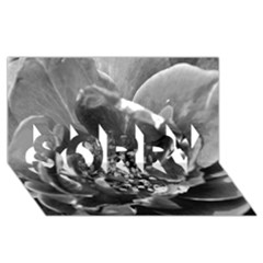 Black and White Rose SORRY 3D Greeting Card (8x4)
