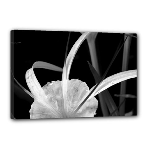 Exotic Black And White Flowers Canvas 18  X 12