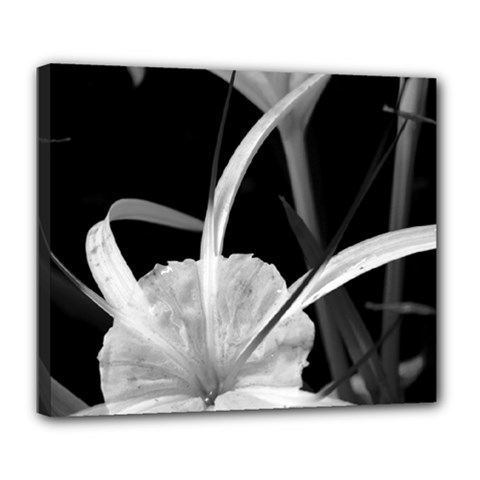 Exotic Black And White Flowers Deluxe Canvas 24  X 20