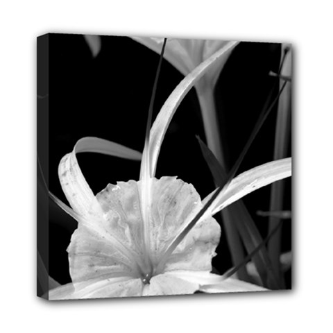 Exotic Black And White Flowers Mini Canvas 8  X 8